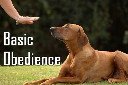 https://diverse-dog-training.myshopify.com/pages/basic-obedience