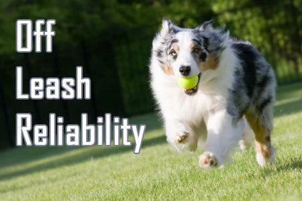 https://diverse-dog-training.myshopify.com/pages/off-leash-reliability