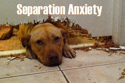 https://www.diversedogtraining.com/pages/separation-anxiety