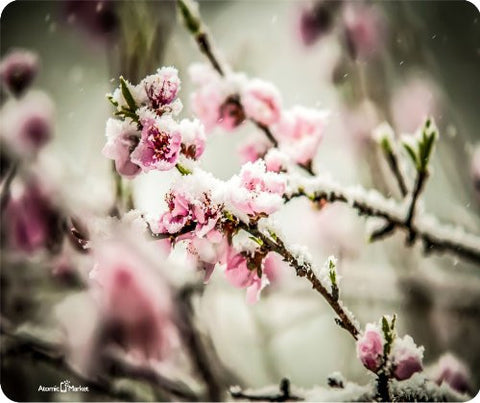 Cherry Blossom With Snow Mouse Pad by Atomic Market