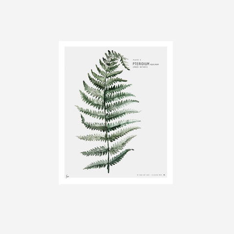 My Deer - Fern Watercolour Print - Prints  SIMPLE FORM.