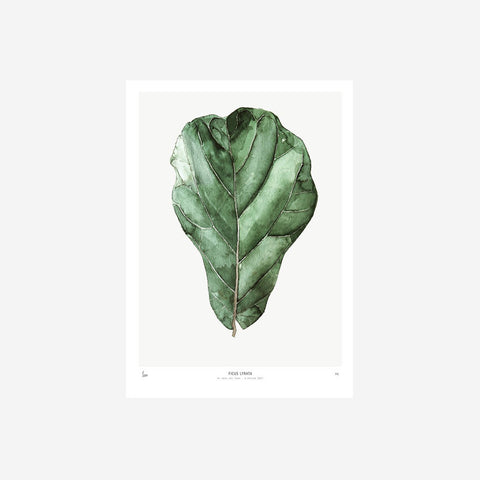 SIMPLE FORM. - My Deer - Ficus Watercolour Print - Print