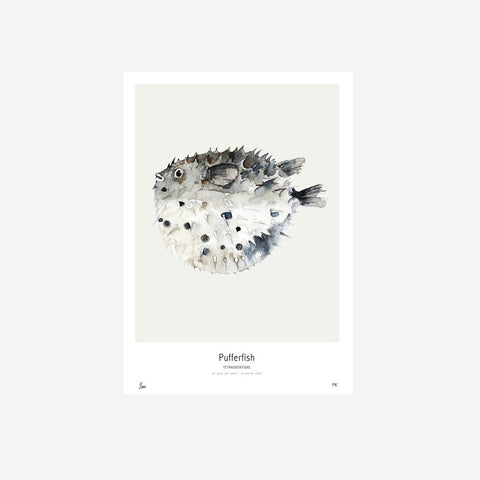 My Deer - Pufferfish Watercolour Print - Prints  SIMPLE FORM.