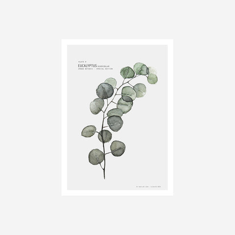SIMPLE FORM.-My Deer Silver Dollar Eucalypt Print Prints