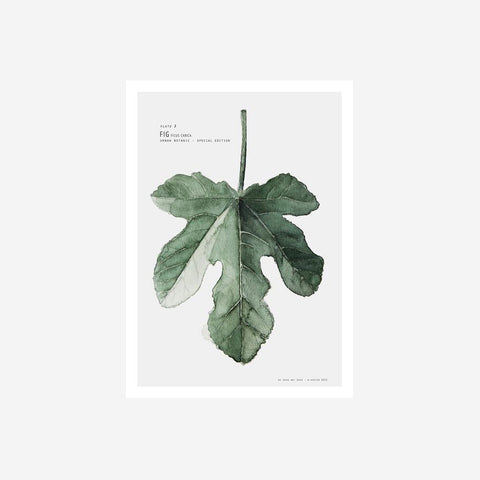 My Deer - Fig Ficus Watercolour Print Art Prints  - SIMPLE FORM.