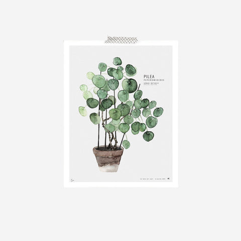My Deer - Pilea Peperomioides Watercolour Print Art Prints  - SIMPLE FORM.