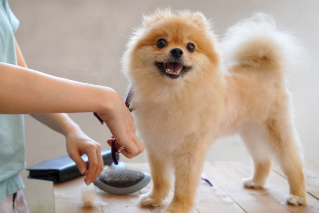 Pet Grooming Diy or Professional Assistance a Better Choice