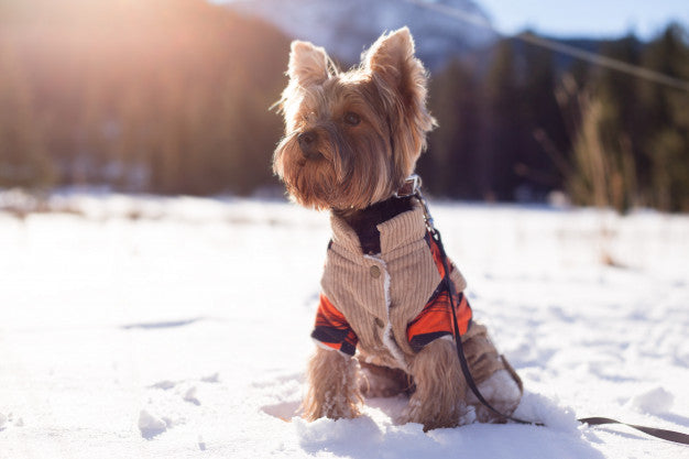 20 Yorkshire Terrier Puppies That Will Steal Your Heart Away