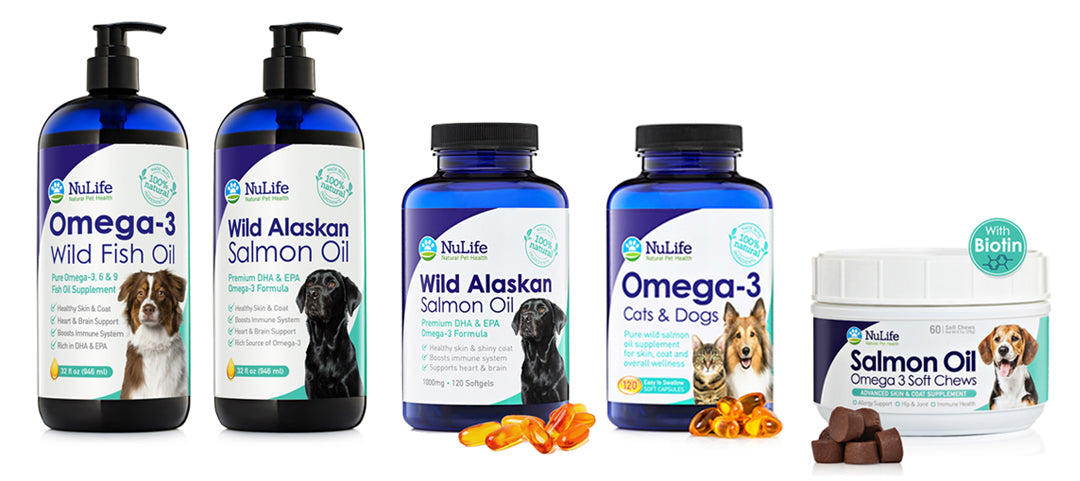 IS FISH OIL GOOD FOR DOGS