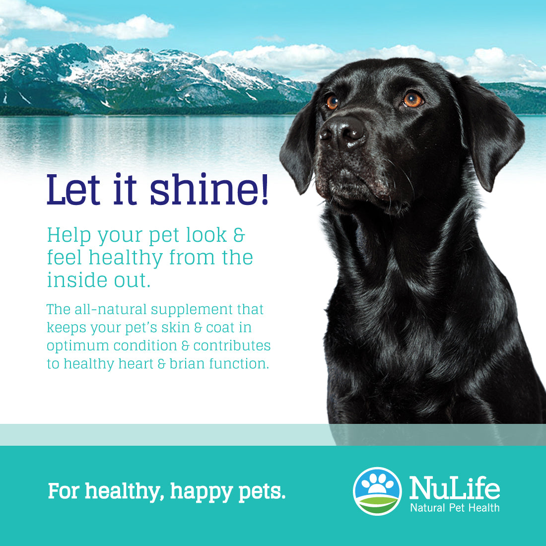 pure salmon oil for dogs