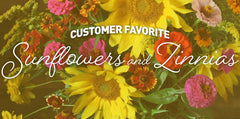 Sunflowers and Zinnias