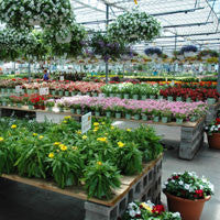Greenhouse and Garden Centers