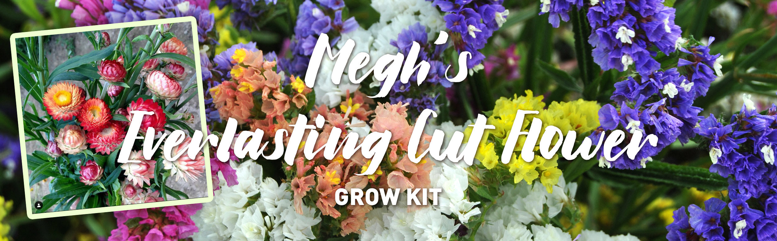 Megh's Everlasting Cut Flower Kit