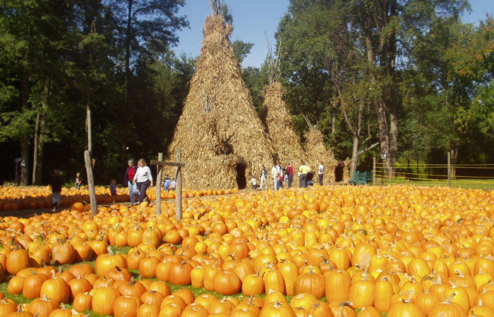 Grow Pumpkin Seed Varieties