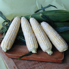Sweet Corn Luscious F1
