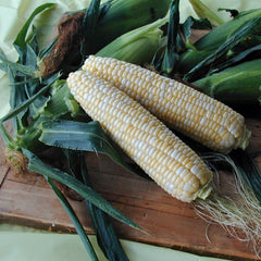 Sweet Corn Harris 1001 F1