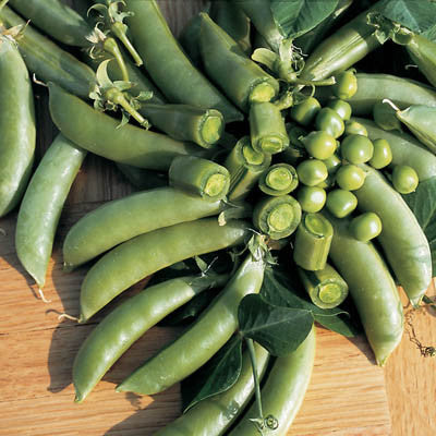 Pea Super Sugar Snap Seeds
