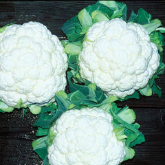 Cauliflower Absolute F1