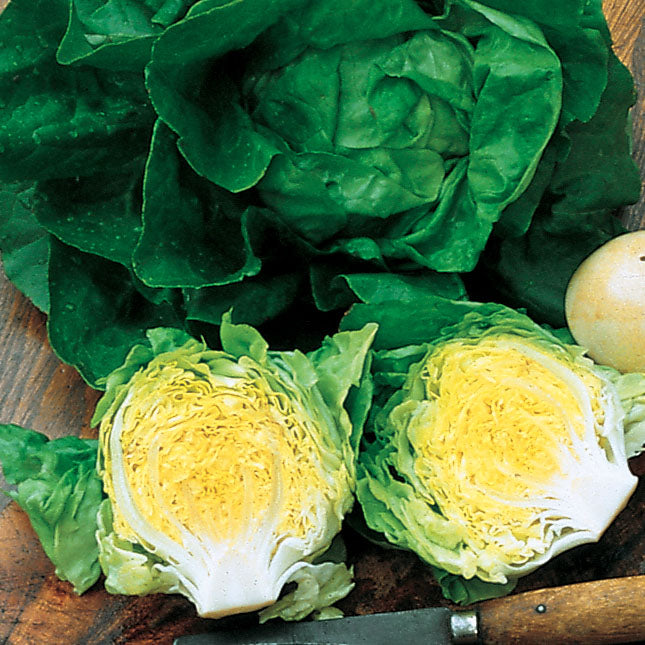 Lettuce Buttercrunch Seeds