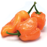 Pepper Orange Habanero