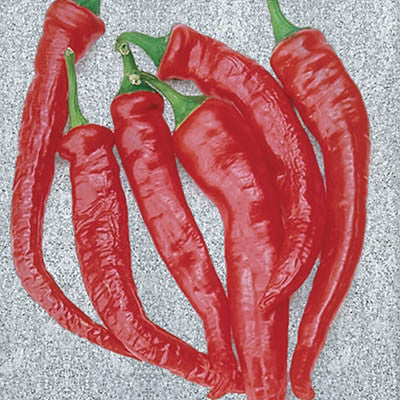 Pepper Cayenne Large Thick