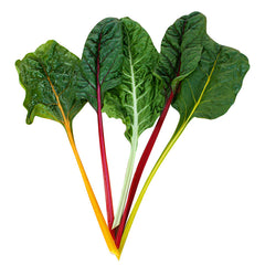 Swiss Chard Northern Lights Mix