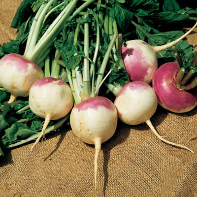Turnip Purple Top White Globe Seeds