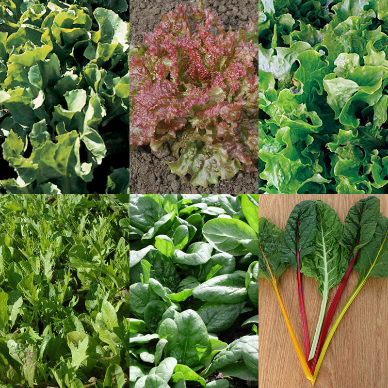 Garden Greens Seed Collection