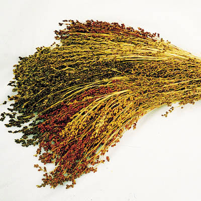 Broom Corn Mix Seeds