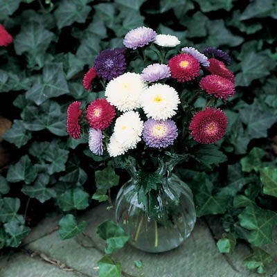 Aster Bouquet Powderpuff Mix