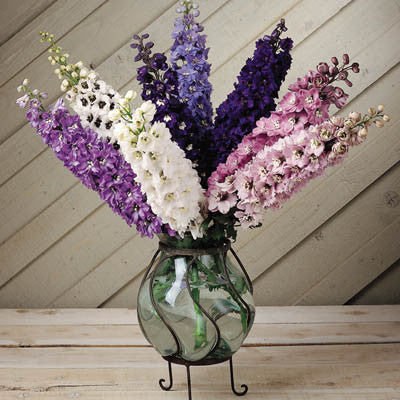 Delphinium Magic Fountains Mix Seeds