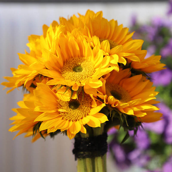 Sunflower Sunrich Gold F1