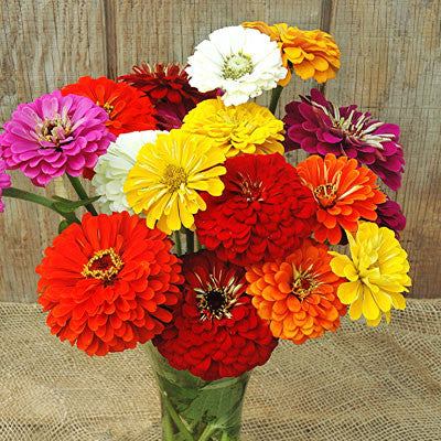 Zinnia Magnificent Mixture