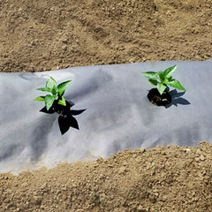 "Planters Paper Mulch 24"" x 50'"