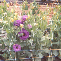 "Cut Flower Netting 36"" x 328'"