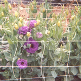 "Cut Flower Netting 36"" x 3280'"