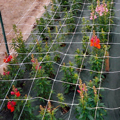 "Cut Flower Netting 48"" x 3280'"