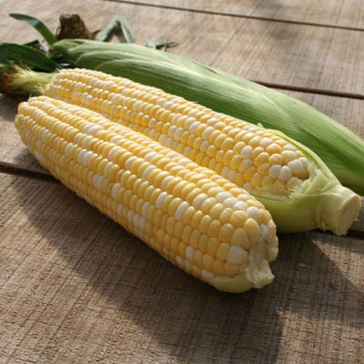 Sweet Corn Allure F1 Seeds