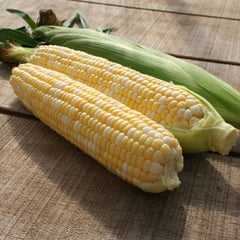 Sweet Corn Allure F1