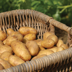 Potato Russet (50 lb bag)
