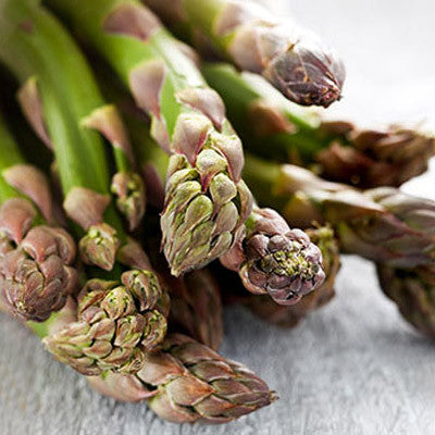 Asparagus Jersey Knight