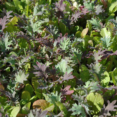 Harris' Micro Greens Mix