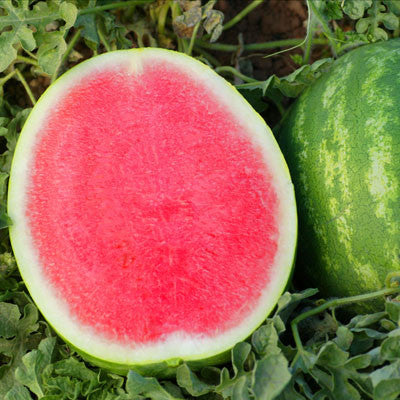 Watermelon Crunchy Red F1 Seeds
