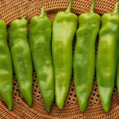 Pepper Chile G76 F1