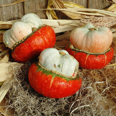 Gourd Mini Red Turban Seeds