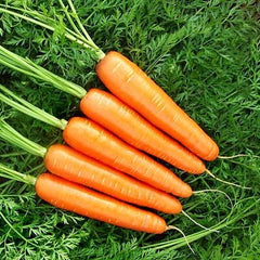 Carrot Goldfinger F1