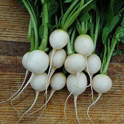how to grow radish from a radish