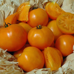 Tomato Chef's Choice Orange F1