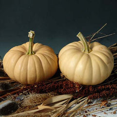Squash Autumn Crown F1