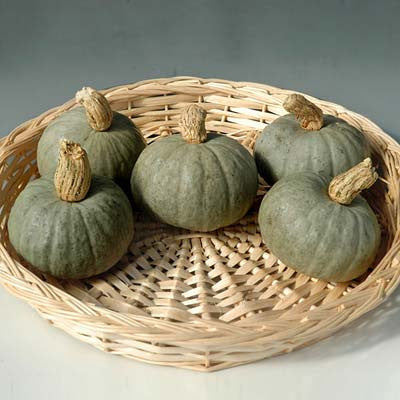 Squash Mini Gray Kabocha F1